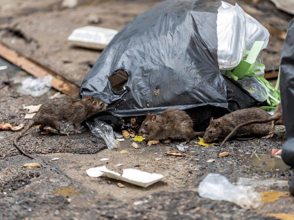 How to avoid rubbish pests